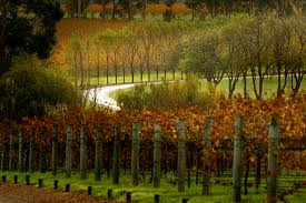 margaret river wine