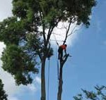 What Can a Perth Tree Removal Company Do?