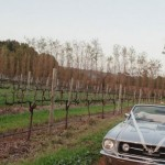 Experience the Sublime Beauty of a Wine Tour