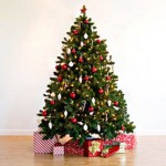 perth christmas trees