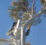 Finding Professional Tree Lopping Services in Perth