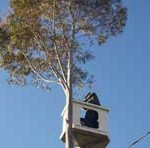 Importance of Tree Services & Maintenance